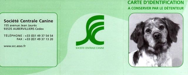 centrale canine puce electronique
